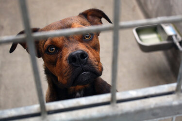 Dog in animal shelter cage