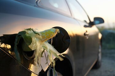 Corn sticking out of a car's gas hole.