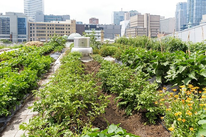 A green roof with a garden.