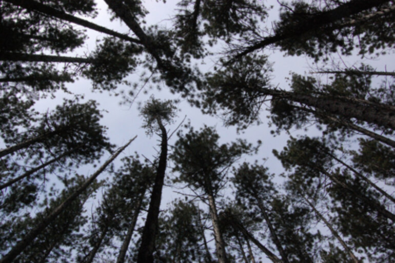 Silhouette of treetops with sky backdrop